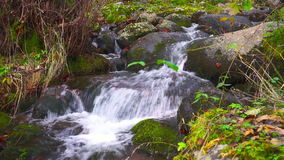 Piękny Halny strumień Głęboko W lesie W jesieni zdjęcie wideo