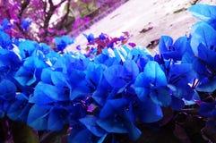 Piękny hd liść Fotografia Stock