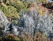 Piękny i różny rozognia drzewo przy Galipan grodzkim Wenezuela zdjęcie royalty free
