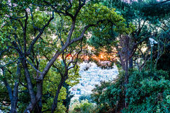 Piękny i tajemniczy drzewo lasowy widok z/zieleń liśćmi i miastowym widokiem Obrazy Royalty Free