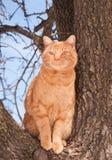 Piękny imbirowy tabby kot obrazy royalty free