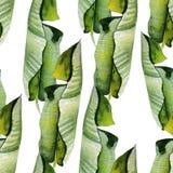 Piękny jaskrawy akwarela wzór z tropikalnymi liśćmi Zdjęcia Royalty Free