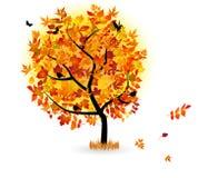 piękny jesień drzewo Zdjęcia Stock
