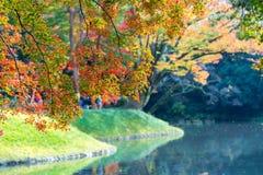 piękny jesień kolor Japonia liście klonowi na drzewie jest gree Zdjęcia Royalty Free