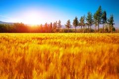 Piękny jesień krajobraz Obrazy Royalty Free