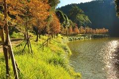 Piękny jesień krajobraz jutrzenkowego redwood drzewa rzeką Obraz Royalty Free