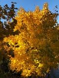Piękny jesień krajobraz w wioska widoku fotografia royalty free