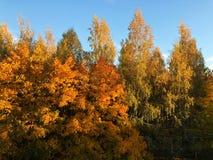 Piękny jesień krajobraz w wioska widoku zdjęcia stock