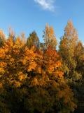 Piękny jesień krajobraz w wioska widoku zdjęcia royalty free