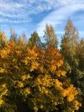 Piękny jesień krajobraz w wioska widoku fotografia stock