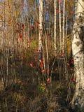 Piękny jesień krajobraz w wioska widoku obraz royalty free