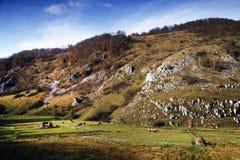 Piękny jesień krajobraz z kolorowym lasem i łąkami w Carpathians zdjęcie royalty free