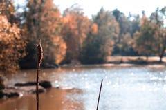 Piękny jesień krajobraz z małym stawem ind backfground brąz, jezioro, jesień, spadek, sezon, pogodny, park; zdjęcia royalty free