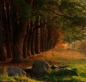 piękny jesień las Fotografia Royalty Free