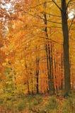 piękny jesień las Obrazy Royalty Free