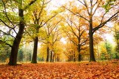 Złoty las Zdjęcia Stock