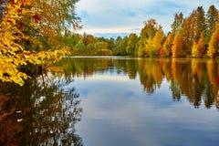 Piękny jesień las w wodzie Zdjęcie Royalty Free