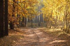 Piękny jesień pas ruchu w lasowym jesień krajobrazie Skład natura Obrazy Stock