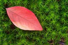 Piękny Jesień Spadek natury wizerunku krajobraz obrazy stock