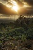 Piękny jesień spadku zmierzch nad lasu krajobrazem z markotnym dr Zdjęcia Royalty Free