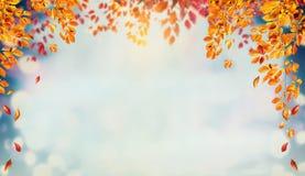 Piękny jesieni ulistnienia tło z śniadanio-lunch i spada drzewnymi liśćmi przy niebem zdjęcie royalty free