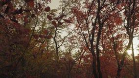 Piękny jesieni ulistnienie na drzewach w lesie przy zmierzchu dniem zbiory