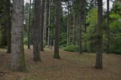 Piękny jesienny las z czcigodnymi drzewami, lokalizować w Krajowym zabytku krajobrazowej architektury park Zdjęcia Stock