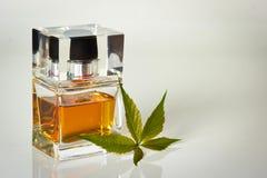 Piękny jest kwadratowy z kobiety pachnidła butelką Obraz Royalty Free