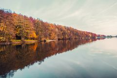 Piękny jezioro i kolorowy las w jesień wieczór zaświecamy Piękny las kolorowi jesieni drzewa odbija w spokojnym jeziorze w d Fotografia Stock