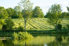 Piękny jezioro krajobraz w Szwecja obrazy royalty free