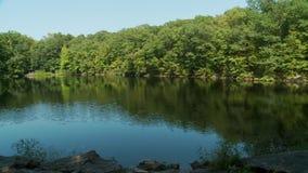 Piękny jezioro otaczający greenery (1 5) zbiory wideo