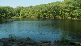 Piękny jezioro otaczający greenery (5 5) zbiory wideo