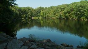 Piękny jezioro otaczający greenery (2 5) zbiory wideo