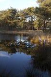 Piękny jezioro w lesie Zdjęcia Royalty Free