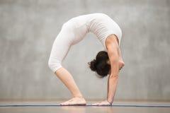 Piękny joga: Postępowa Bridżowa poza Zdjęcia Royalty Free