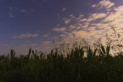 Piękny jutrzenkowy niebo z gwiazd Białymi chmurami i pole uprawne, Zdjęcie Royalty Free