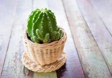 Piękny kaktus w filiżanki wazy wystroju Zdjęcie Royalty Free