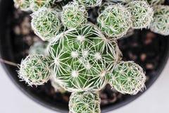 Piękny kaktus z selekcyjną ostrością Obrazy Stock