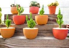 Piękny kaktusowy miejsce na drewnianych półkach Zdjęcie Stock