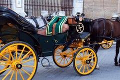 piękny kareciany koń Obrazy Royalty Free