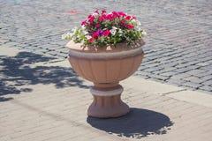 Piękny klasyczny kamienny flowerpot zdjęcie stock