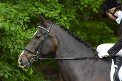 piękny koń Obrazy Royalty Free