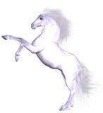 piękny koń Zdjęcie Stock