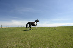 piękny koń pola otwarte Fotografia Royalty Free