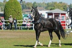 Piękny koń przy kraju jarmarkiem zdjęcie stock