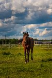 Piękny koński pasanie w bujny zieleni paśnika outdoors lata nasłonecznionym bieg obrazy stock