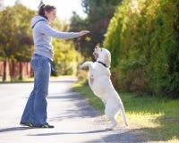 Piękny kobiety szkolenia pies fotografia royalty free