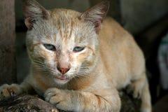 piękny koci zdjęcie royalty free