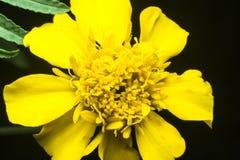 Piękny kolor żółty zdjęcia stock