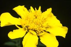 Piękny kolor żółty fotografia stock